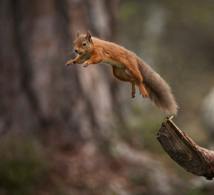squirrel leap